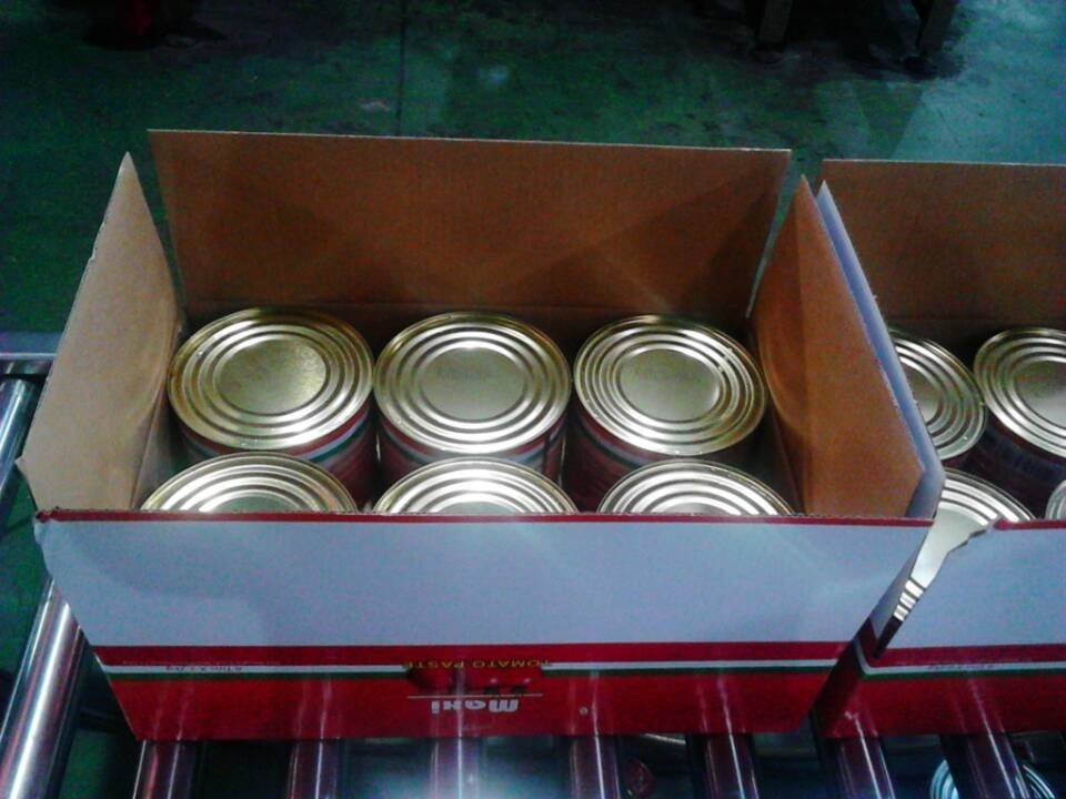 best price tomato paste and ketchup from factory