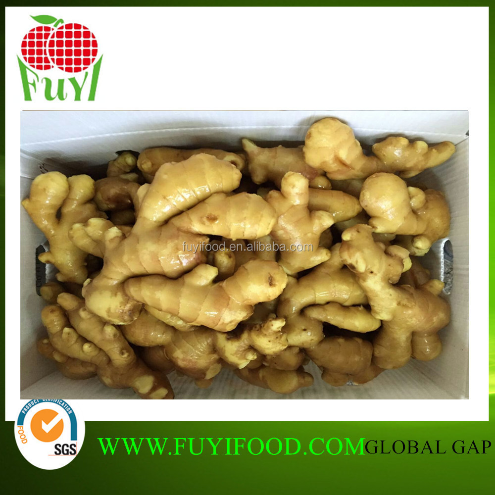 New Chinese Vegetable Fresh And Big Ginger Price