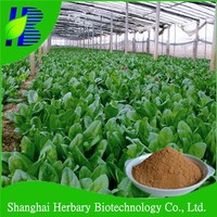 Organic spinach extract food supplement distributors