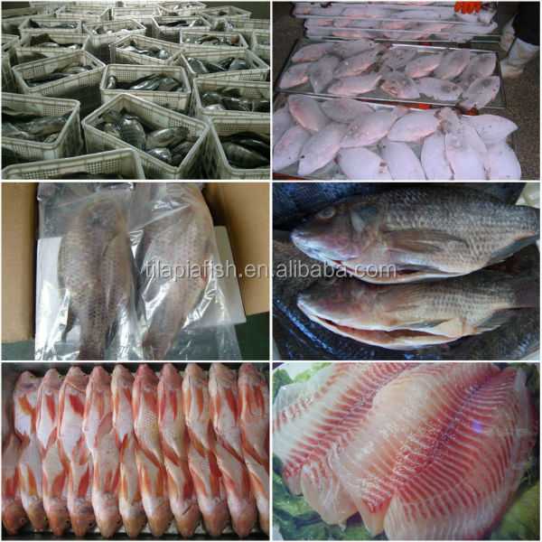 China Frozen black tilapia fish whole round 90%NW on sale