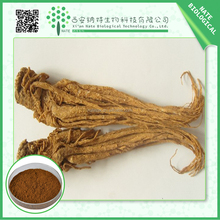 100% Natural chinese angelica root extract 1%Ligustilide