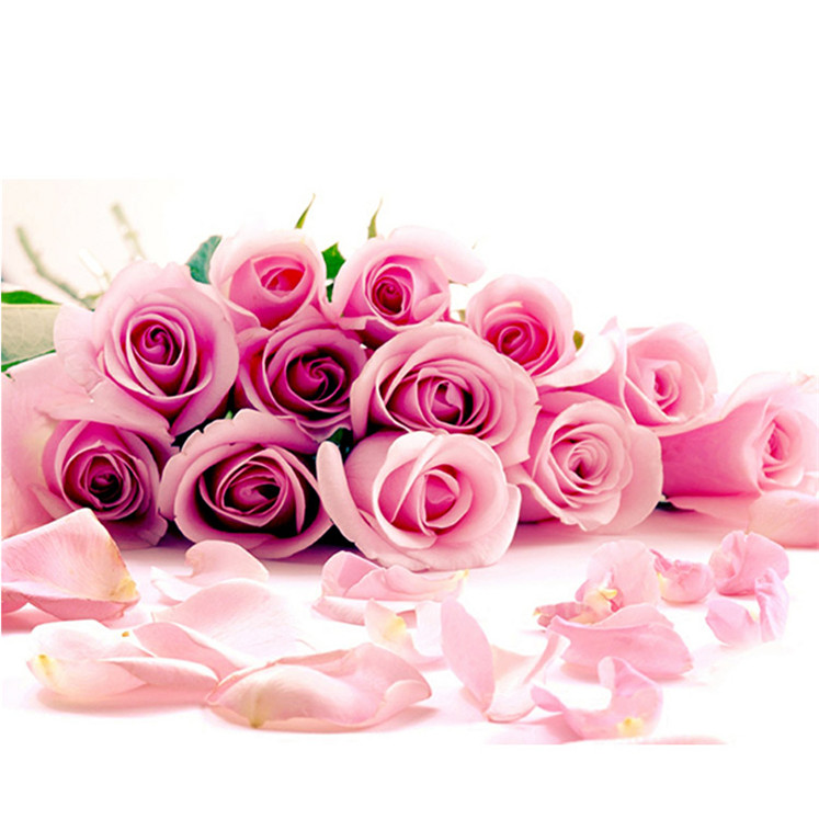 Hot products to sell online Tea Rose one dozen roses