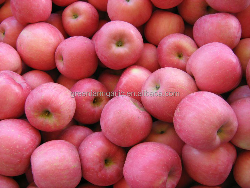 export fresh red delicious apple fresh apple fruit