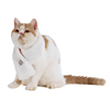 Cute Animals Costume Comfortable Collar Pet Accessories Winter Collar Dog