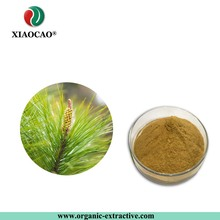 Pinus massoniana Lamb Strong antioxidant Pine Needle Extract