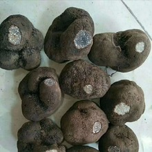 Reasonable Price Fresh Tuber Uncinatum Black Truffles