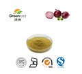 Manufacturer supply natural onion extract powder