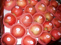 china fresh apple price for fresh apple