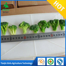 Wholesale Bulk Grade A Frozen Broccoli