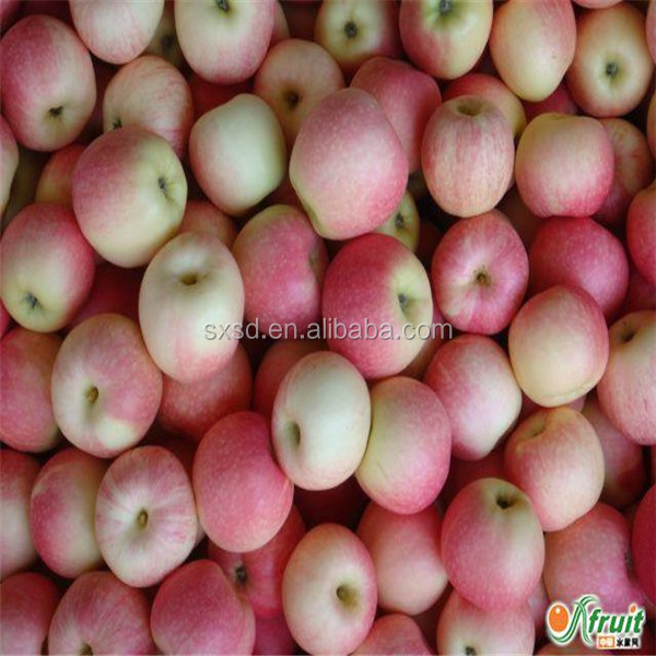 Red gala apple fruit specification 150-198 for wholesale