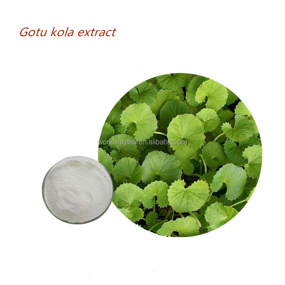 Free samples gotu kola extract powder , China supplier bulk sale 90% asiaticoside high quality gotu kola herb extract