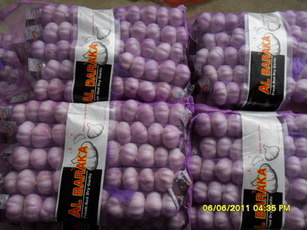 Ali/Alho/Ajo/Garlic fom China Supplier