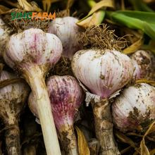 Bulk braid garlic for sale