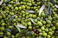 Olive Oil for sale 2015