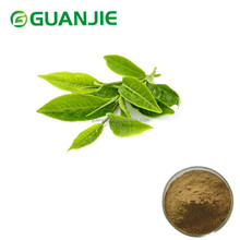 ISO Manufacturer Green Tea Extract EGCg Price