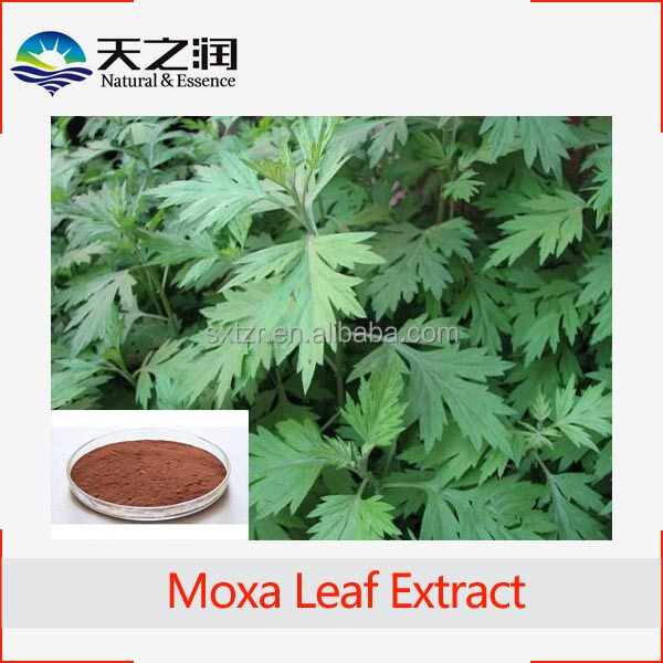 High quality Argy Wormwood Leaf Extract10:1in herbal extract