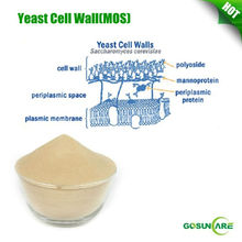 High quality Yeast cell wall / Mannan Oligosaccharide / MOS