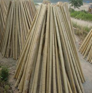 natural bamboo cane ,pole for decoration structure and furniture