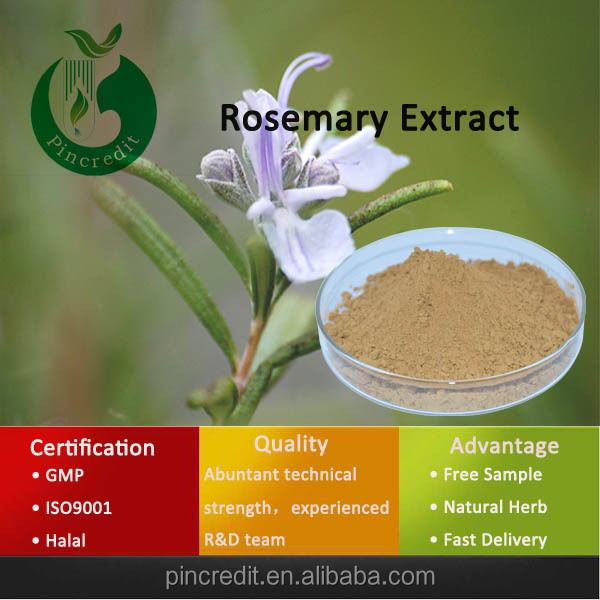 Natural Rosemary Extract Powder/rosemary Leaf Extract