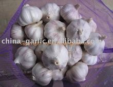 Garlic bulbs sale