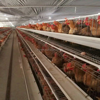 Auto Feeding System Chicken Laying Cage Full Automated Poultry Battery Cages