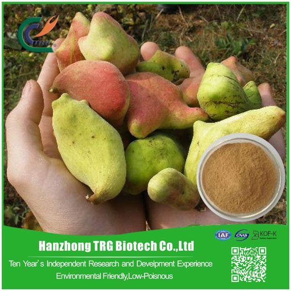 free sample Galla Chinensis Extract with CE certificate