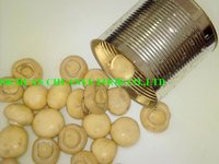 Cultivated Mushroom Champignon in Can