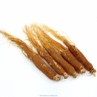 Whole Red ginseng roots