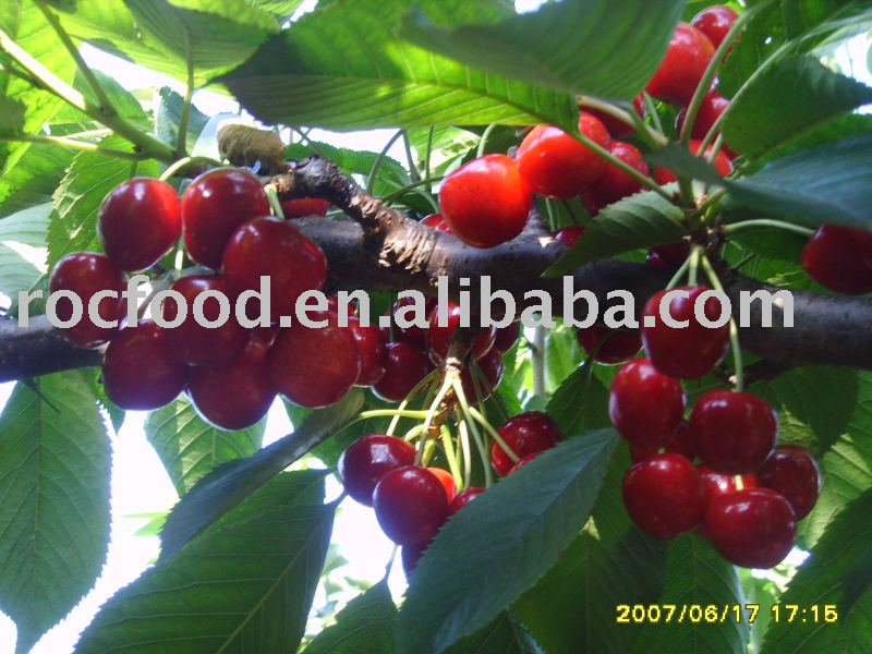 Chinese Fresh Cherry