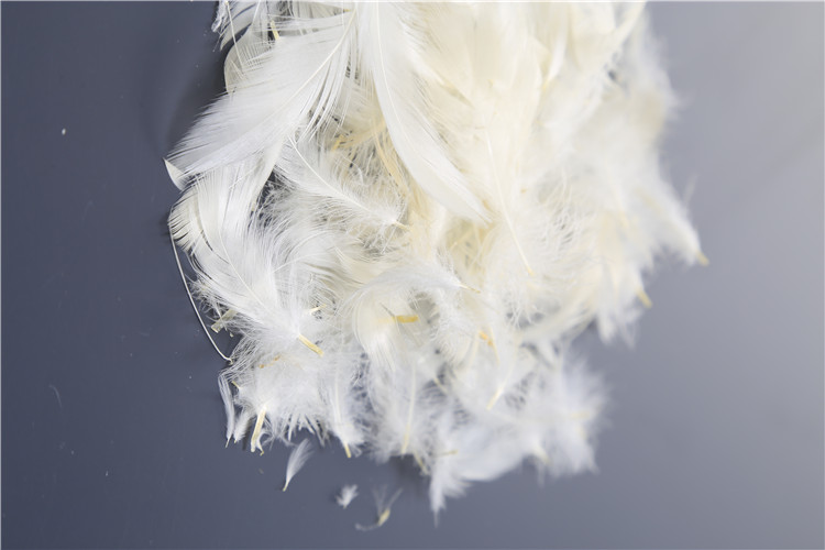 Widely used superior quality goose feather & down