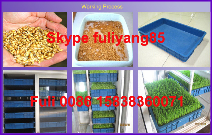 Green Hydroponic fodder system grow fresh grass for animal feeding