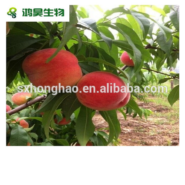 import china products 100% pure honey peach powder