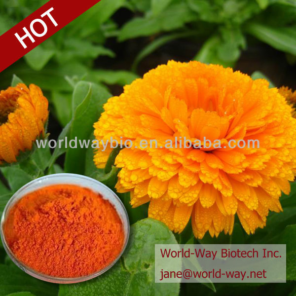 Manufacture Marigold Extract-Lutein powder Lutein ester
