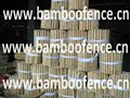 Natural Bamboo Cane border for flower support or vegetables