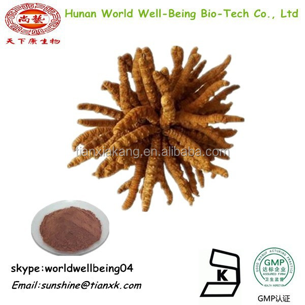Health Food Cordyceps Sinensis Root Powder Extract10:1 / Polysaccharide Powder Cordyceps Extract Powder 60%