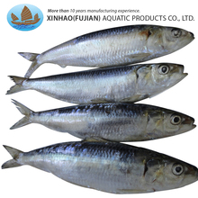 China supplier ocean seafood frozen sardine fish for bait