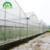 2019 low cost multi-span greenhouse with  high structures and  plastic film  for tomatoes and potatoes