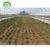 Hot sale Agricultural Single Tunnel Greenhouse 200 micron plastic film cover material for sale