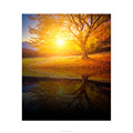 Sunset Scenery Nature Landscape Big Tree Poster HD Picture Canvas Art Prints for Office Decor New Year Room Decor/SJMT2021