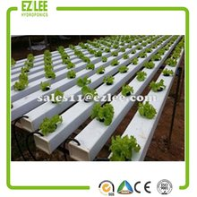 Agricultural Greenhouses For Soilless Hydroponics / Nft Systems For Tropical And Desert Areas