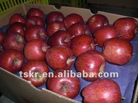 kashmir apple summer red apple