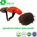 100% pure and organic shell broken Ganoderma Lucidum Extract