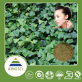 cGMP Manufacturer Supply Natural Dried Ivy Leaf Extract Hederacoside C Powder KS-09