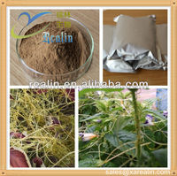 ISO Certificated China Dodder Extract Powder for Adjusting incretion