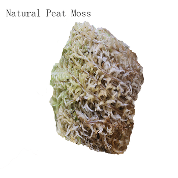 Natural Material Sphagnum Moss For Planting Orchid