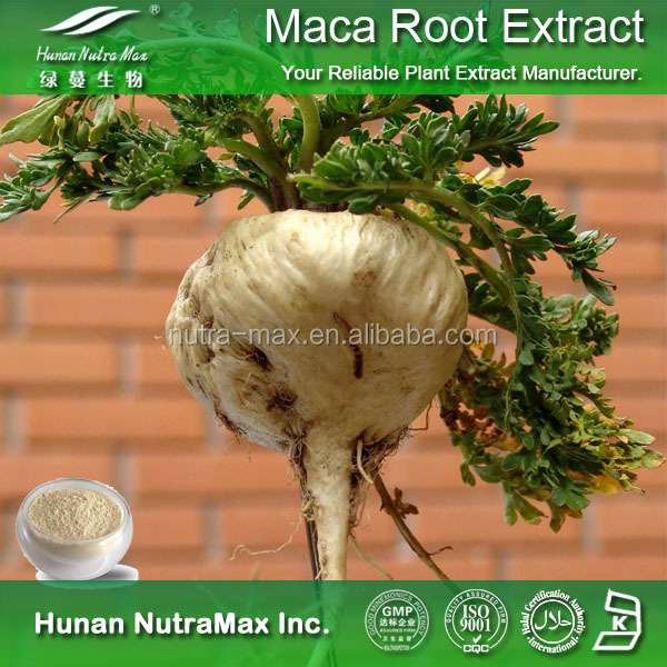 NutraMax Supplier - Maca Root Extract Powder 4:1,10:1