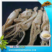 Top quality ginseng root extract