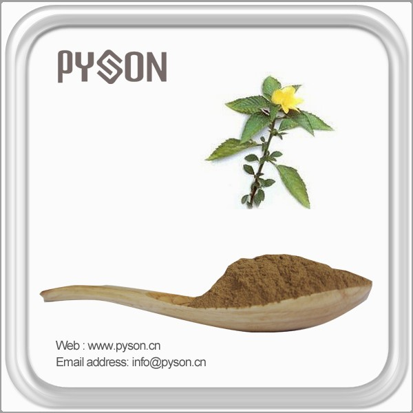 Brand new damiana leaf extract powder supplier for wholesales