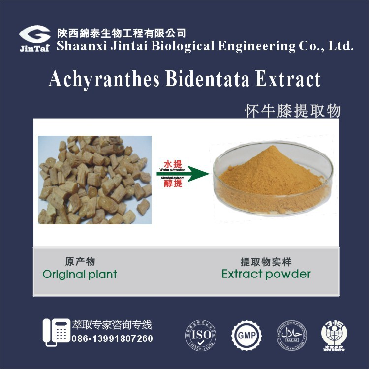 factory supply 10:1 20:1 Achyranthes Bidentata extract powder