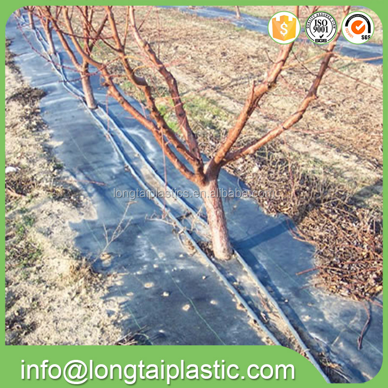 High quality Agriculture weed mats for blueberry tree with good price